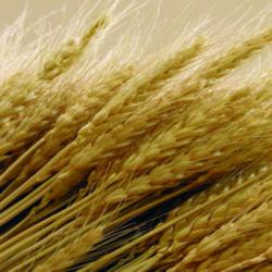 La fibra, mucho más que bienestar digestivo