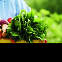 Una buena nutrición, clave para luchar contra el envejecimiento