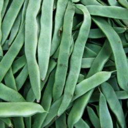Judías verdes, ligeras, diuréticas y digestivas