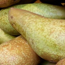 Peras de Rincón de Soto, fruta de la huerta riojana