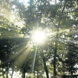 El sol, un aliado para una adecuada nutrición