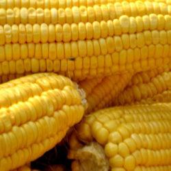 El maíz, un cereal muy nutritivo