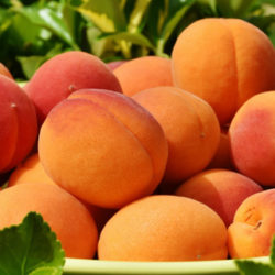 Albaricoque, fruta del verano