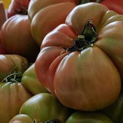 Tomate rosa de Híjar