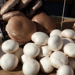 ¿Qué diferencia hay entre hongos y setas?