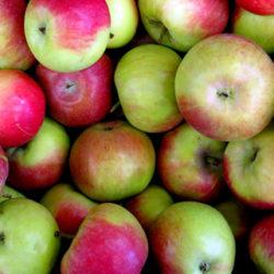 La manzana asturiana