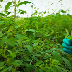 Los investigadores usan esporas microbianas para mejorar la trazabilidad de los alimentos