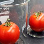 tomate-laboratorio